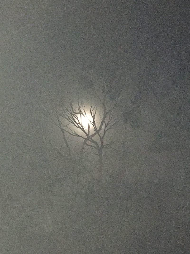 moon_shots_for_australia_02